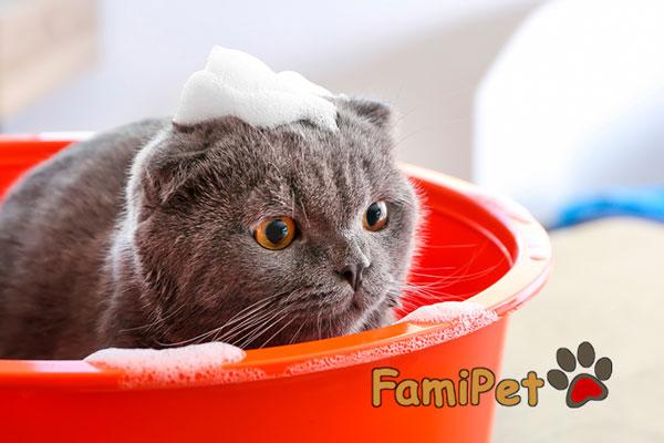 cách chọn sữa tắm cho mèo
