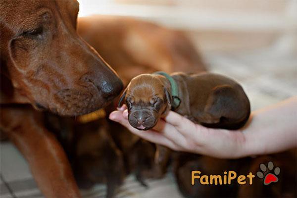 dinh dưỡng cho chó sơ sinh