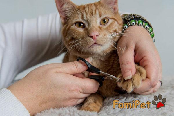 kéo cắt móng cho mèo
