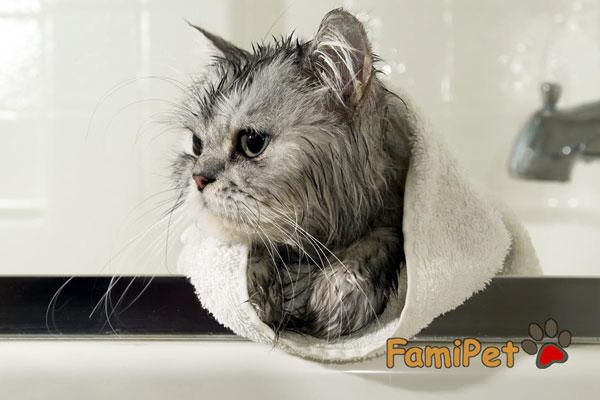sữa tắm cho mèo ở hà nội