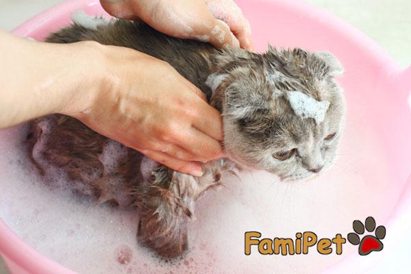 sữa tắm cho mèo con