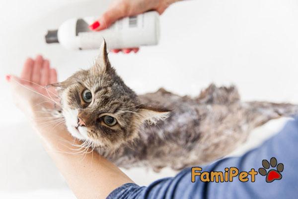 sữa tắm trị ve cho mèo