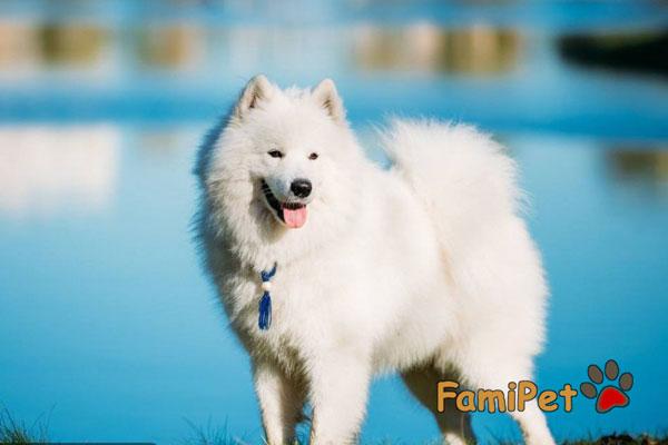 sữa tắm yú cho chó lông trắng